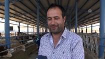 Kurduğu Çiftlikte 15 Kişiyi İş Sahibi Yaptı