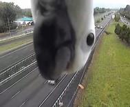 QUEENSLAND - Meraklı Papağan Hız Kamerasına Takıldı
