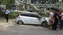 ÇINAR AĞACI - Tarihi Çınar Ağacı Aracın Üzerine Devrildi, Yara Almadan Kurtuldu
