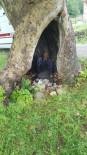 Yağmurda Sığındığı Ağaç Kovuğunda Yıldırım Düşmesi Sonucu Öldü