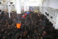 TAVUK ÇİFTLİĞİ - Bankacılıktan Bin 500 Tavuklu Çiftliğe