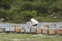 KATO DAĞı - Beytüşşebaplı Arıcılar Kato'ya Çıkmaya Başladı