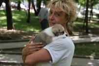ABDAL - Otomobille Köpeği Ezip Öldüren Şahıs Gözaltına Alındı