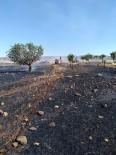 25 Dönüm Buğday Tarlası Kül Oldu