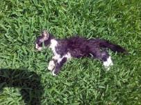 PİTBULL - Antalya'da Kedilere Pitbull Saldırısı