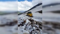 Camili'de Haziran Ayında Kar Temizleme Çalışması