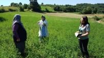 TARIM SİGORTASI - Çiftçilere Destekler Sürüyor