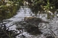Sıcakta Kuşların Su Keyfi