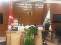 UYUŞTURUCU KURYESİ - İstanbul'da Yılın İlk 5 Ayında 6 Ton Uyuşturucu Ele Geçirildi
