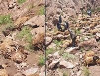 AHMET KARATAŞ - Önce bir koyun atladı... 'Yaşanan olaya şok olduk'