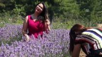 GÖCEK - 'Ot Çıkmasın' Diye Dikilen Lavanta Turizmi Hareketlendirecek