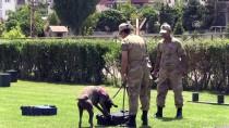 JAKEM'in Eğitimli At Ve Köpeklerinden Gösteri