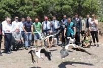 ENDEMIK - Tedavisi Tamamlanan Leylek, Baykuş Ve Çakal Doğaya Salındı