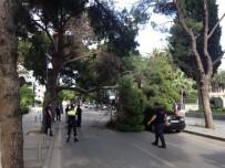 ALSANCAK - Çam Ağacı Araçların Üzerine Devrildi