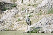 KÜLTÜR VE TURIZM BAKANLıĞı - 'Fotoğraf Avcıları' Nallıhan'da Buluştu