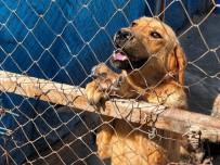 SOKAK KÖPEKLERİ - Ramazan Bayramında Sahipsiz Hayvanlar İçin 'Ziyaret Edin' Çağrısı