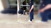 SAĞLIK PERSONELİ - Yaralı Köpek Hastaneye Polis Aracıyla Yetiştirildi