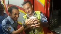 TRAFİK ÖNLEMİ - Yaramaz Kedi Polis Ve İtfaiyeye Ecel Terleri Döktürdü