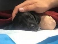 KEPÇE OPERATÖRÜ - Bacakları kesilen yavru köpeğin ölümüyle ilgili gözaltı