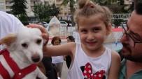 Patileri Kesilerek Katledilen Köpek İçin Hayvanseverlerden Eylem