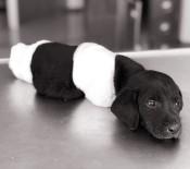 KEPÇE OPERATÖRÜ - Yavru Köpek Vahşetinde Flaş Gelişme