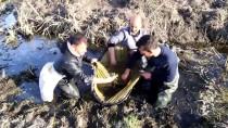 KAZANCı - Belgeli 'Kurbağa Avcıları' İşbaşında
