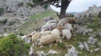 YILDIRIM DÜŞMESİ - Osmaniye'de Yıldırım Düştü Açıklaması 22 Koyun Telef Oldu