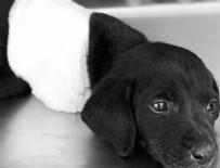 KEPÇE OPERATÖRÜ - Yavru köpeği öldüren kepçe operatörü tutuklandı