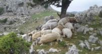 Yıldırım Düştü Açıklaması 22 Koyun Telef Oldu