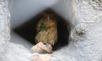 YIRTICI KUŞ - 'Balık Baykuşu' Mersin'de Koruma Altına Alındı