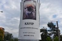 ULUBATLı HASAN - Bu Köpeği Bulana Ödül