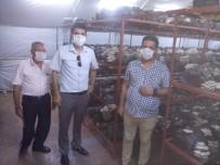 KÜLTÜR MANTARı - Gülnar'da Mantar Yetiştiriciliği Teşvik Ediliyor