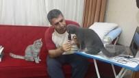 CUMHURİYET SAVCISI - Hayvansever Savcı'dan Çağrı Açıklaması