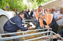 TARıM - İzmir Tarımda Şaha Kalktı