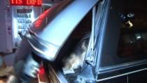 EĞİTİM DERNEĞİ - Kadıköy'de Köpeğe Şiddet Uygulayan Kişi Gözaltına Alındı