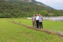 DAVUTLAR - Karabük'te Çeltik Ekimi Başladı