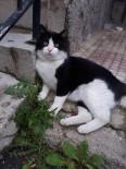 SIYAH BEYAZ - Kayıp Kedisini Her Yerde Arıyor