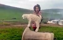Minik Kız Keçi Yavrusuna Şarkı Söyleyerek Dans Ettirdi