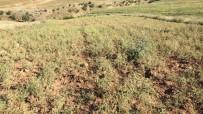 Siirtli Çiftçiler Destek Bekliyor