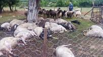 TARıM - Ağaca Düşen Yıldırım 32 Koyunu Telef Etti