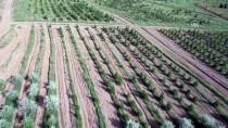 VEYSEL EROĞLU - Atatürk Orman Çiftliği'ne 2,1 Milyon Fidan