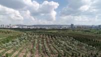 VEYSEL EROĞLU - Bakan Eroğlu Açıklaması 'Başkente Önemli Bir Yeşil Alan Kazandırdık'