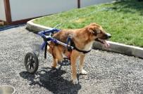 BEYLIKDÜZÜ BELEDIYESI - Beylikdüzü'nde Felçli Ve Hasta Hayvanlar İçin Tedavi İmkânı