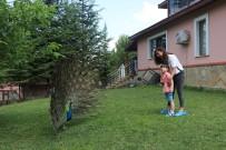 HAYVAN SEVGİSİ - Bu Çocuklar Hayvanlarla Mutlu Oluyor