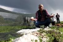 TARıM - Erzurum'da Dolu Seraları Vurdu