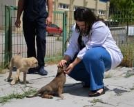 HAYVAN HAKLARı - Hayvan Sevgisi Ders Müfredatına Alınsın