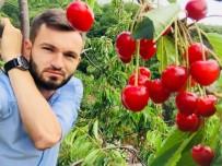 Hobi Bahçelerinde Kiraz Bereketi