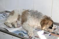 BERFIN - (Özel) Genç Kız Otomobil Çarpan Köpeğin Tedavisi İçin Zamanla Yarıştı