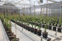 OTOMASYON - (Özel) Üzüm Sektöründe İhracatı Katlayacak Proje
