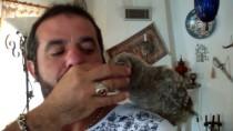 Yavru Baykuşu Güçlenmesi İçin Kuzu Etiyle Besliyor